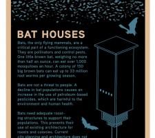 Bat House-Urbana, Il